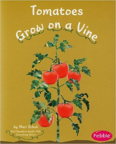 1665Tomatoes Grow on a Vine