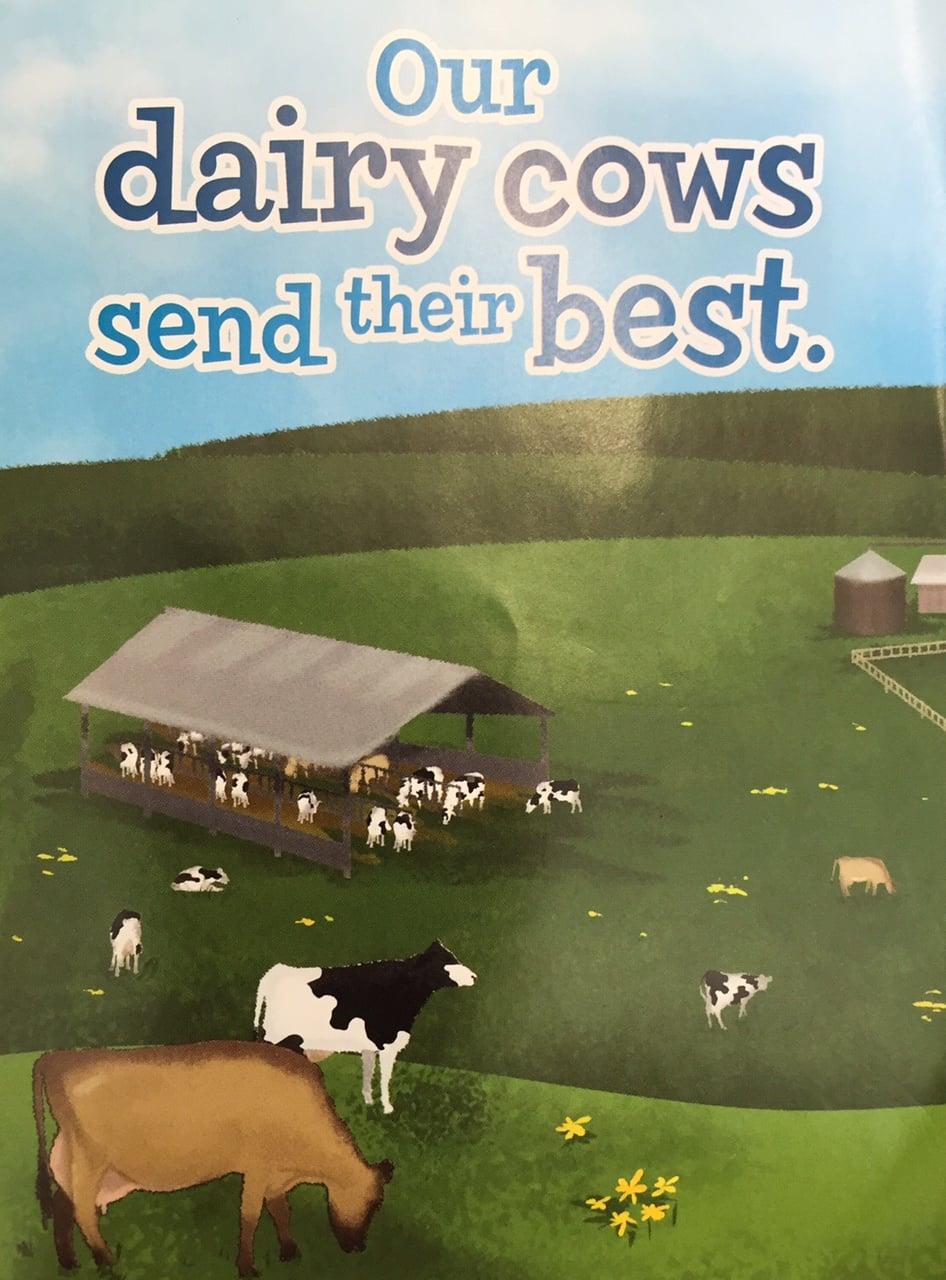 1645Dairy Cows Send Their Best