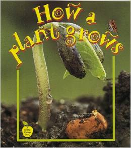 1205How a Plant Grows?