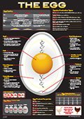1284The Egg