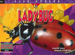 794Ladybug