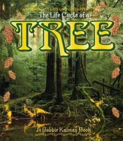 1078The Life Cycle of a Tree
