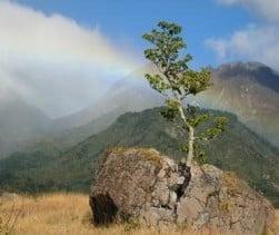 Rock Split by Tree