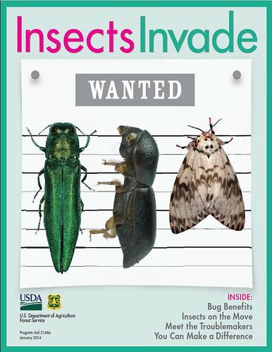 12034Insects Invade