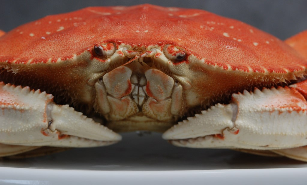 Dungeness Crab | Oregon Agriculture in the Classroom
